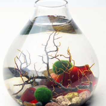 Marimo Terrarium - Japanese Moss Ball Aquarium- Sea Fan - Red Sea Glass - Living Home Decor - Green Gift