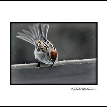 Bird Photography american tree sparrow,bird in winter,snowing,lonely bird,cute,home decor,gifts under 25,nature,adorable bird,taking flight