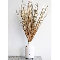 "Preserved Wild Grass in Natural Color - 45-55"" Tall"