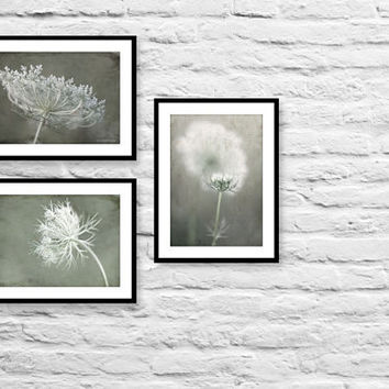 Nature photography gift set collection of 3 wall decor prints in gray and white fall decor mystical queen anne's lace rustic art prints