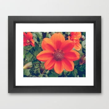 Orange dahlia Framed Art Print by cycreation