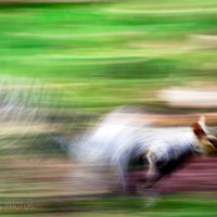 Squirrel canvas, animal photography, squirrel wall art, child's bedroom, green art, fine art photography, panoramic, gallery wrap canvas