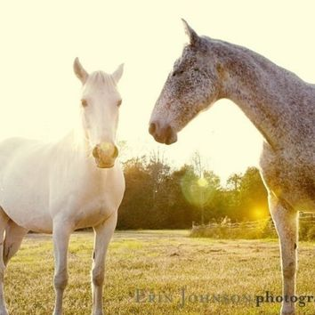 horse photography fine art horse photograph yellow decor farm decor nature horse portrait babiekins magazine Two Horses