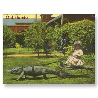 ALLIGATOR POWER, Old Florida Postcards from Zazzle.com