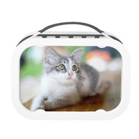 Cute Grey and White Kitten Photo Lunchbox
