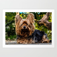 Yorkshire Terrier Art Print by Knm Designs