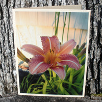 Pink Day Lilly Photo Greeting Card by CardstockEquine on Etsy