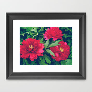 Red peony Framed Art Print by cycreation