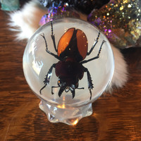 Stag Beetle Globe Paperweight