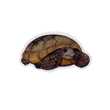Gopher Tortoise Wildlife Magnet