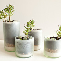 Recycled Wine Bottle Succulent Planters  Size by marianandhazel