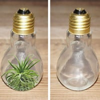 Lightbulb glass terrarium jar jug light bulb vase for air plant