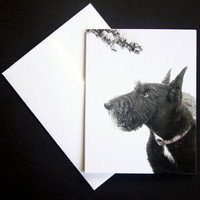 Black Scottish Terrier With Snowy Branch Holiday Card - Dog Picture Greeting Card - Scottie Dog Christmas Card - Scotty Dog Greeting Card