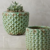 Shade Tree Garden Pot by Anthropologie in Guacamole Size: