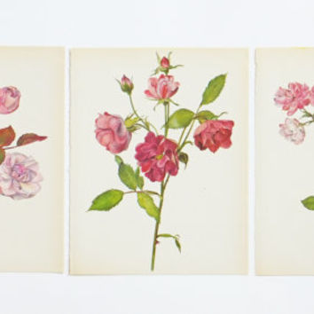 Set of Three Vintage Roses Prints, Pink roses, Roses Art, Blooms, Botanical PIctures, Home Decor, Kaplicka