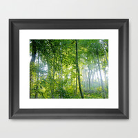 MM - Sunny forest Framed Art Print by Pirmin Nohr
