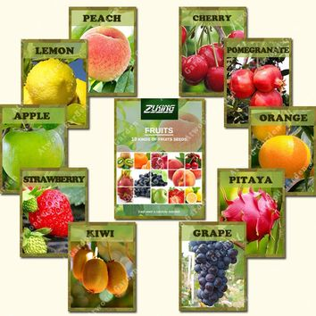 ZLKING 10 Varieties 550PCS Mixed Organic Fruit Tree Seeds Sweet Candied Fruit Non-Gmo Vegetable Plant Seeds For Home Garden