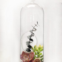 "Terrarium Glass- XL 12"" x 5"" bubble"