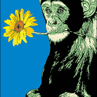 Steez - Monkey Flower - Poster