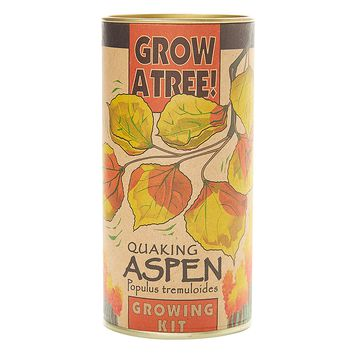 Quaking Aspen | Tree Seed Grow Kit | The Jonsteen Company