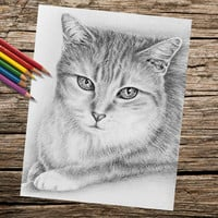Tabby Cat Sitting coloring book page, adult coloring book, coloring page, adult coloring page, coloring book for adults, printable coloring