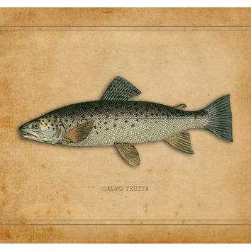 Brown Trout Print, Fly Fishing, Trout, Fresh Water, Fly Fishing Gifts, Fish Print, Brown Trout Gifts, Fly Fishing Art, Brown Trout Artwork