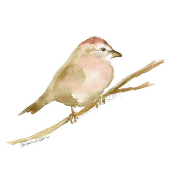 Sparrow Watercolor 2