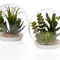 Desert & Succulent Terrarium | Global-garden | Dining-room | Inspiration | Z Gallerie