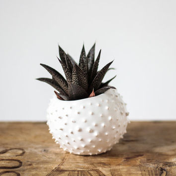 Small handmade ceramic succulent planter- white- flower pot- planter for flowers- air planter
