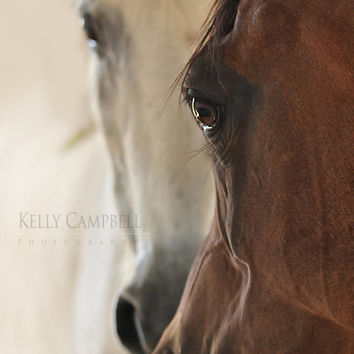 The Bond Photo Print on Double Matted Frame / Arabian Horses / Equine Photography / Home Decor / House Wear