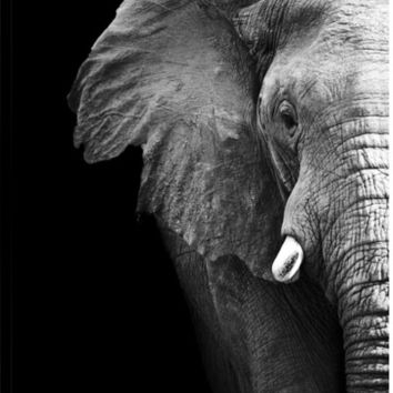 Elephant Close Up Animal Canvas Wall Art Print