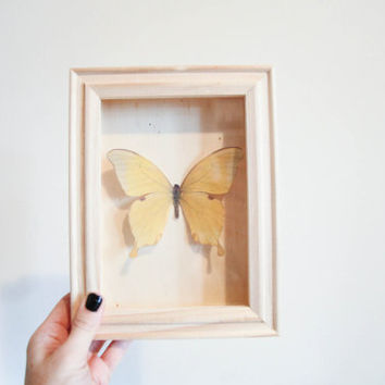 Yellow Faux Butterfly shadow box 5x7