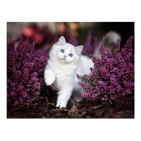 White Cat Postcard