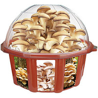 Grow Your Own Mushroom Dome
