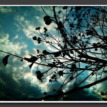 85 X 11 Buds and Branches glossy proffesional by BRGproductions