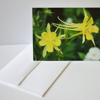 Note Card Set, Yellow Columbine Photo, Unique Gifts, Colorado Photograph, Lasting Impression, Set of 6