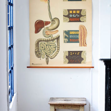 Vintage Anatomy School Chart of the Digestive System - Original Anatomical Poster