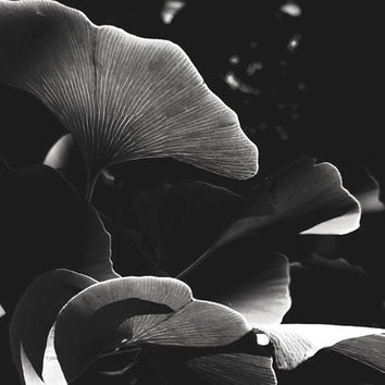 Nature Photography | Black and White  | Print | Fine Art Photography | Delicate | Elegant | Botanical Photography | Design | Minimal