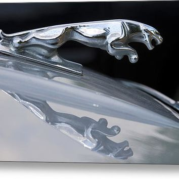 Jaguar Car Hood Ornament Reflection Metal Print By James Bo Insogna
