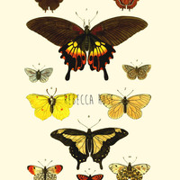 Vintage Butterfly Botanical Print, Fine Art Print, Nature Wall Art, Natural History Illustration, Giclee Print, Antique Science Print