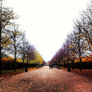 Landscape Photography | Regents Park | London | Autumn | Fall | Nature | Fine Art Photography | Red | Plum | Gold | Orange | Yellow