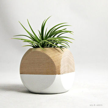 Geometric Air Plant Cube Planter // White  Natural by seaandasters