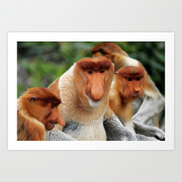 Proboscis Monkey Art Print Promoters