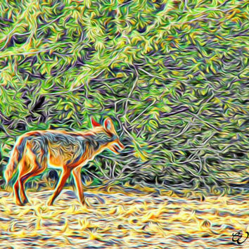 Abstract Desert Coyote Arizona Abstract Art Print,Photography, Wall Art Decor, Southwest Art, Arizona Wildlife Art