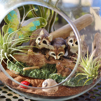 "Woodland Raccoon Terrarium ~  Large 7"" Glass Hanging Terrarium Kit with 3 Air Plants ~ Housewarming gift ~ Woodland Terrarium ~ Gift Idea"