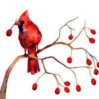 Cardinal Winter Berries Christmas Watercolor Illustration Print Feather Nature Branch Woodland