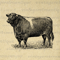 Printable Graphic Shorthorn Bull Download Cow Antique Digital Image Vintage Clip Art for Transfers Printing etc HQ 300dpi No.3539