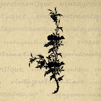 Flower Plant Silhouette Digital Image Download Graphic Printable Vintage Clip Art for Transfers Making Prints etc HQ 300dpi No.3603