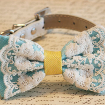 Blue Dog Bow Tie, Pet Accessory, Blue and yellow bow, Lace bow, Dog lovers, Beach wedding, Some thing blue, Cute, Chic, classy