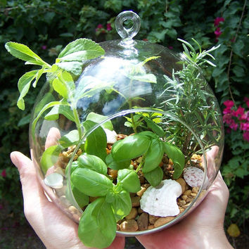 Herb Garden Terrarium Kit Hanging Glass ORB Seeds DIY Project